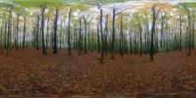 Nationalpark Jasmund, Buchenwald im Herbst